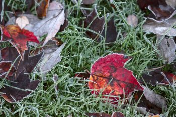 Our First Frost
