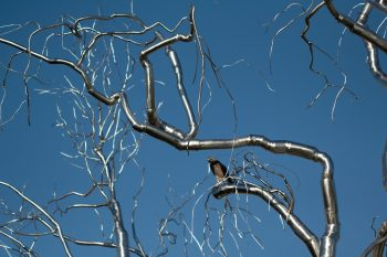 Hawk in Steel Tree