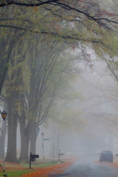 Foggy Neighborhood