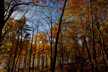 The Woods At Lake Needwood