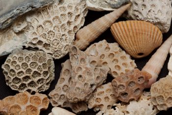 Coral and Shells