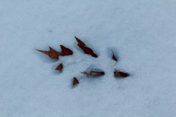 A Leaf In The Snow