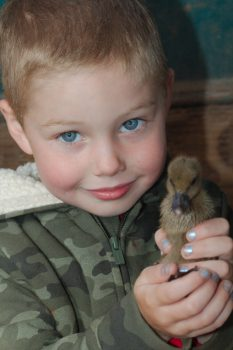 Glen With A Duckling